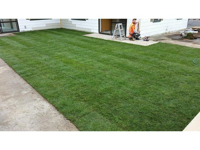 A new lawn in Whitby, Wellington