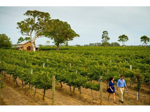 Wine Tasting, Coonawarra Wine Region, Limestone Coast, South Australia