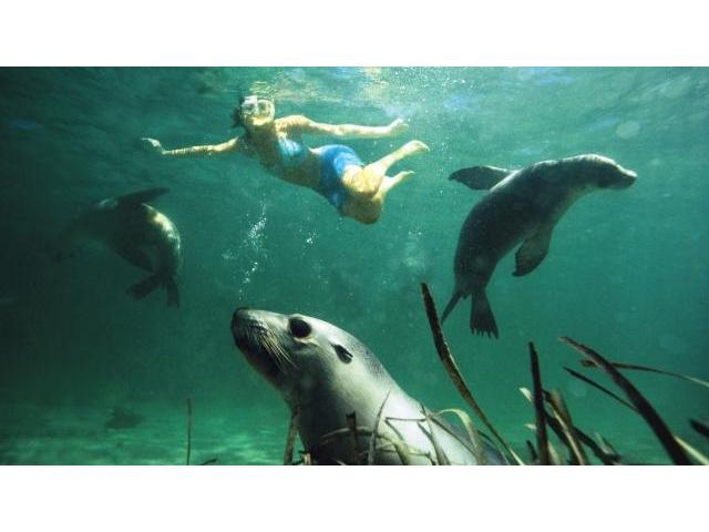 Swimming with Sea Lions on the Eyre Peninsula, South Australia