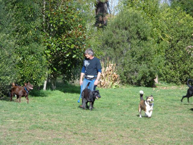 Dogs are exercised in secure paddock areas