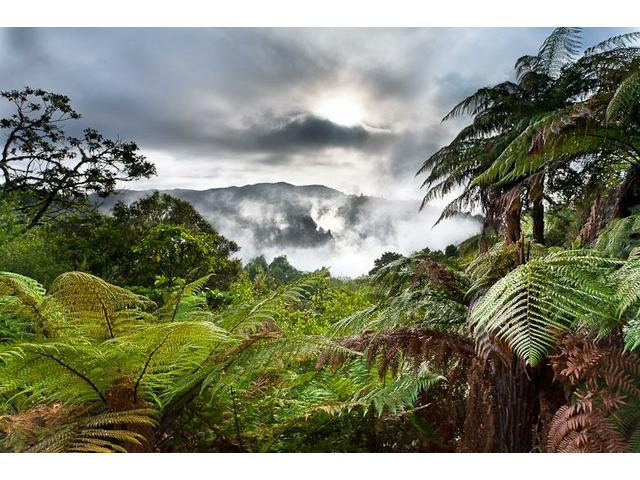 Magnificent Waimangu Volcanic Valley, Rotorua