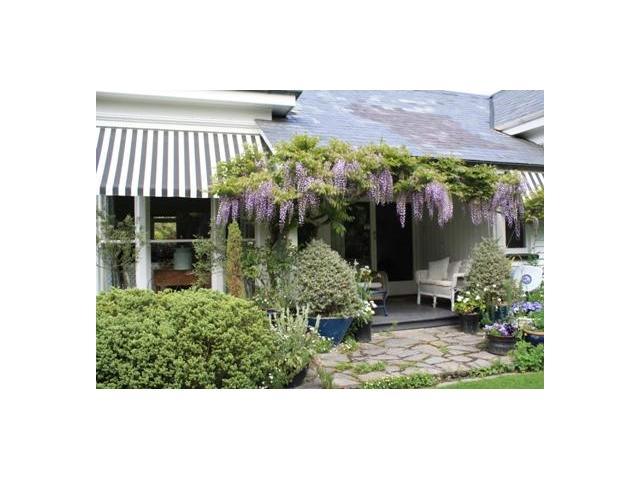 Wisteria porch at Kate Sheppard House and Garden Christchurch