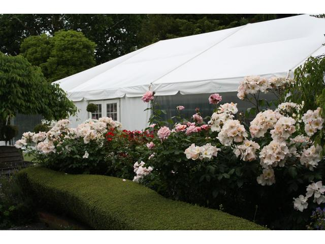 Rose garden marquee at Kate Sheppard House
