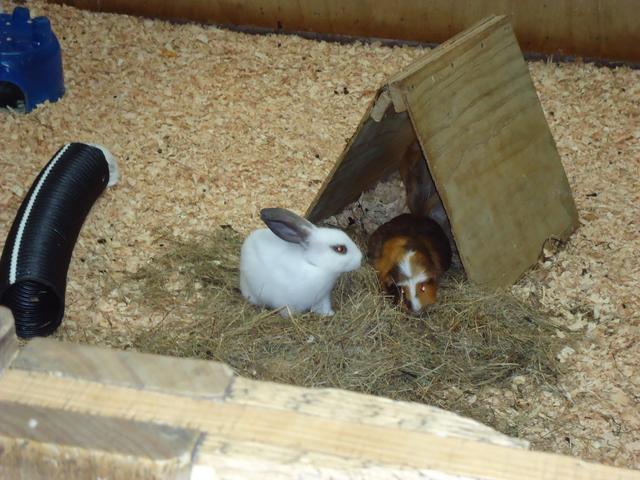 Rabbits at the Farm Walk