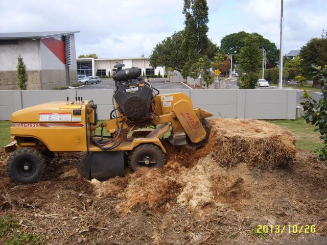 Grinding Two Large Palm Stumps Central Tauranga
