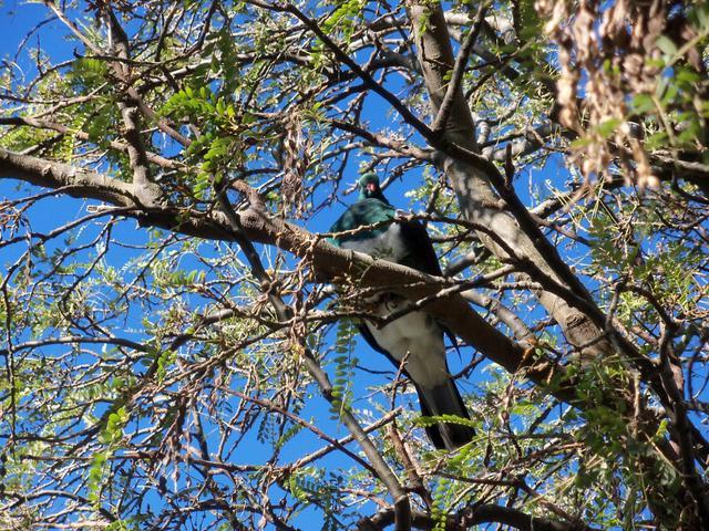 native birds aplenty