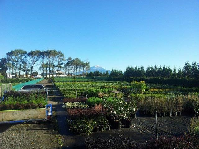 Landscape Essentials Nursery Call Kurt on 0275788261