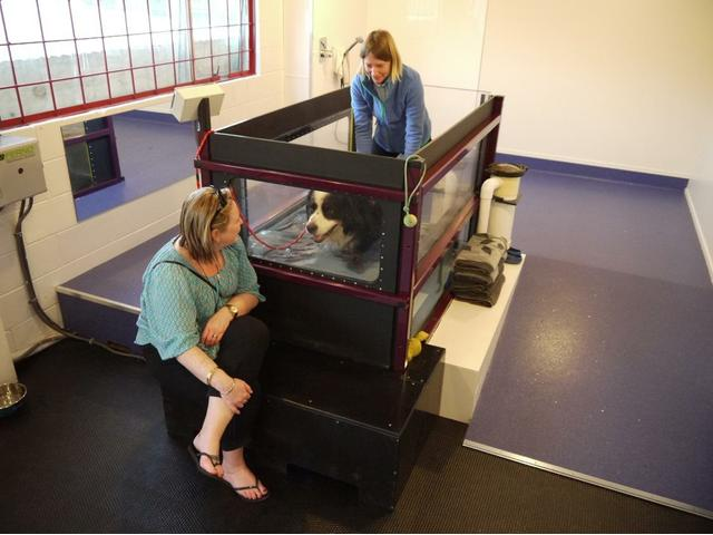 Hydropaws offer a purpose built clinic devoted to canine rehabilitation, health and fitness.