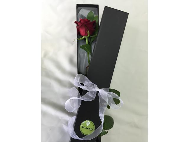 First Love (Single Rose $29 )