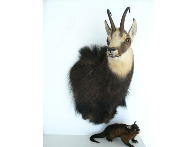 Freeze Dry Taxidermy