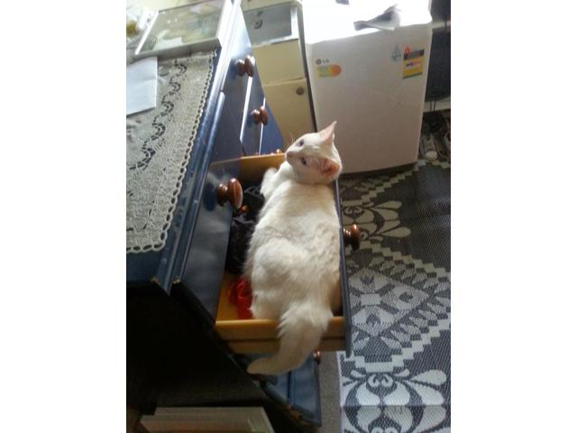 Opal luvs fitting in drawers and boxes