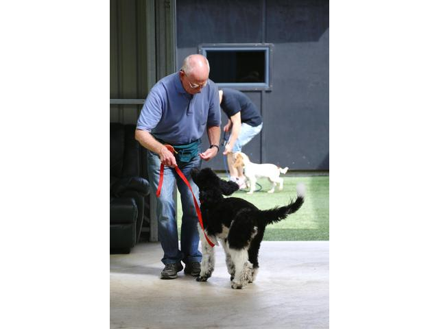 ACE Puppy training class in action