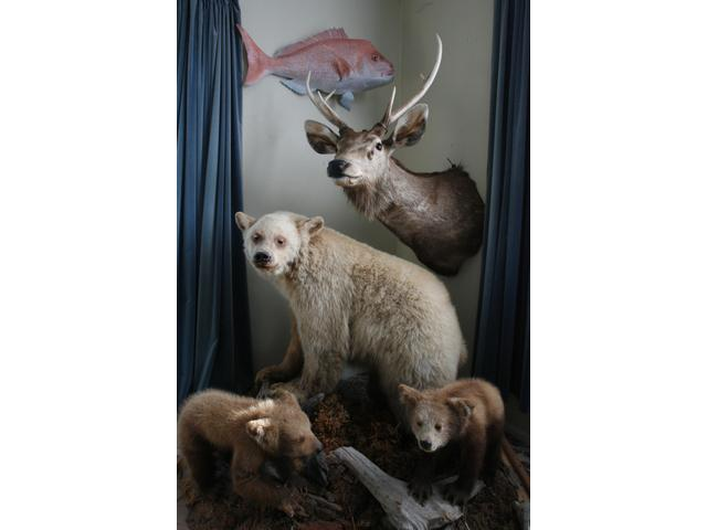 Conventional Taxidermy
