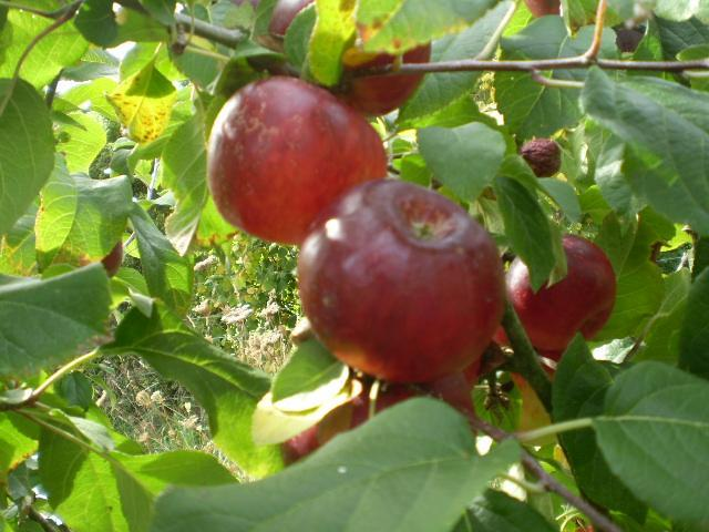 Fruit Trees Are Our Specialty :)